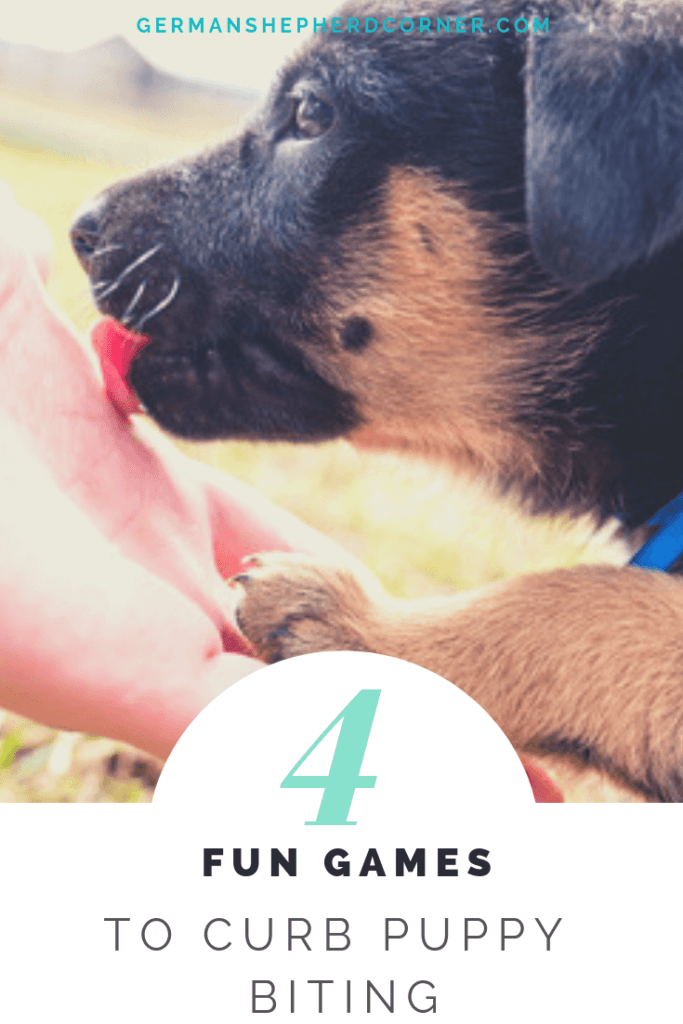 4 Fun Games to Curb Puppy Biting