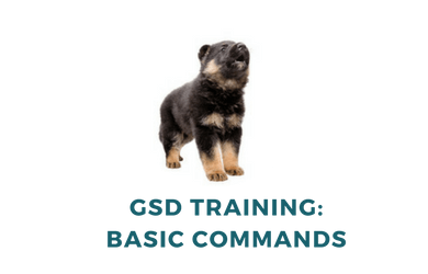 German Shepherd Training: 7 Golden Rules