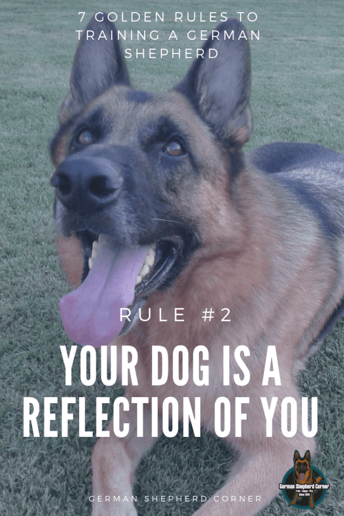 Your Dog is a Reflection of You