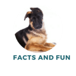 Fun and Facts About German Shepherds