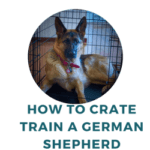 How to Crate Train a German Shepherd