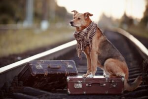 Dog GPS Tracking Devices for Your Dog