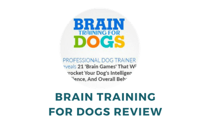 Detailed Review of Braining Training for Dogs Program