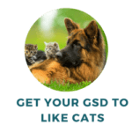 How to Train a German Shepherd to Like Cats