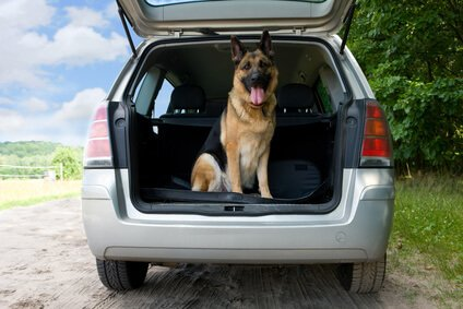 Buyers Guide for the Best Safety Harness for Dogs in Cars