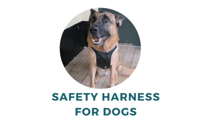 keep your dog safe in the car with a safety harness