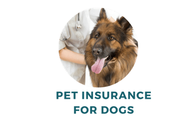Get the Best Value Pet Insurance for Your Dog