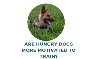 Are Hungry Dogs More Motivated to Train