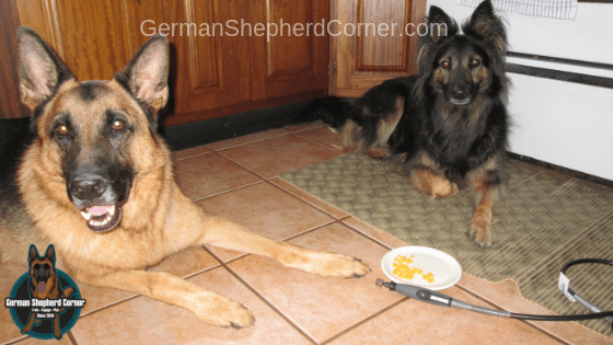 Training a Dog to be comfortable with a Dog Nail Grinder
