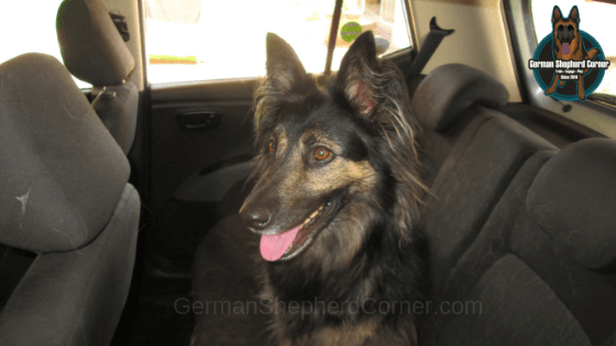 Best Tips on How to Cure Dog Car Anxiety