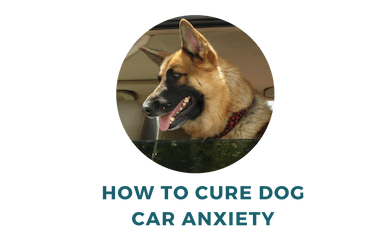 How to Cure Dog Car Anxiety