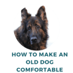 How to Make an Old Dog Comfortable